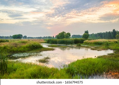 Ecological wetland environment at dusk