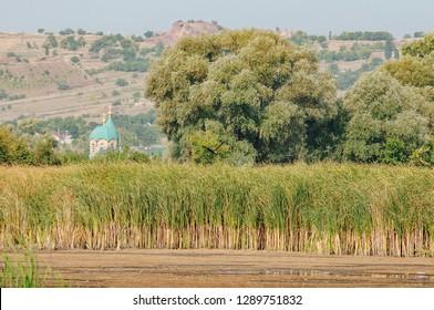 Ecological wetland. Natural green wetland vegetation against lake. Birds and water flora.