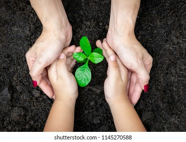 Ecology concept child and adult hands holding plant a tree sapling with on ground world environment day