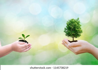 Ecology concept child and adult hands holding big tree and sapling with on blurred sunset background world environment