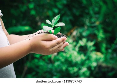 Ecology concept child hands holding plant a tree sapling with on ground world environment day