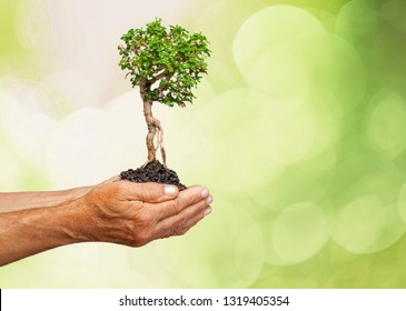 Ecology concept child human hands holding big plant tree with on blurred background world environment          - Image
