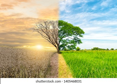Ecology concept environment change tree forest drought and forest refreshing