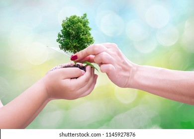 ecology concept good hands children and adults holding tree grow in hand environmental protection