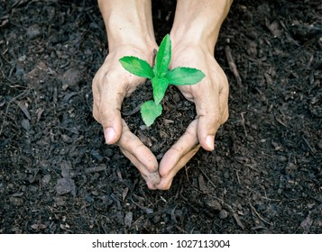 Ecology concept hands holding plant a tree sapling with on ground world environment day
