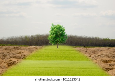 Ecology concept human hands holding big plant concept tree forest drought and forest refreshing