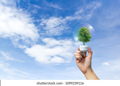 Ecology concept human hands holding big plant tree in light bulb with world environment