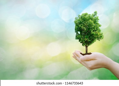 Ecology concept human hands holding big plant face tree look world environment