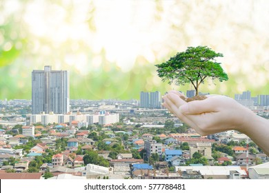 Ecology concept Human hands holding big plant with on blurred sunset background,World Environment Day and buildings of the public