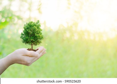 Ecology concept Human hands holding big plant tree with on blurred sunset background world environment day