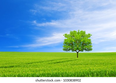 Ecology concept. New life.Tree, field and beautiful sky