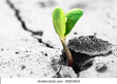 Ecology concept. Rising sprout on dry ground.