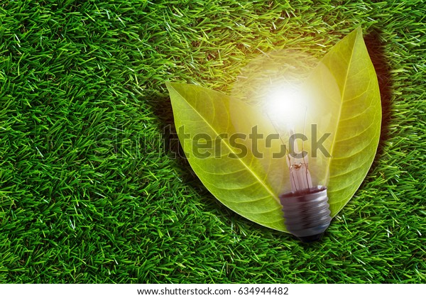 Ecology concept, save energy, tree leaf and light bulb on green grass