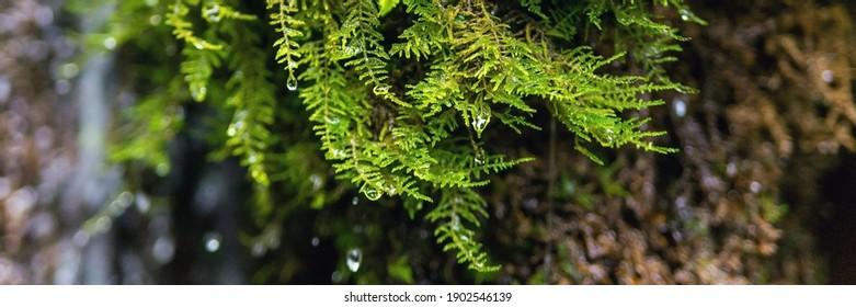 Écologie et nature. La source d'eau de source propre et potable entre roches de pierre et mousse verte humide.