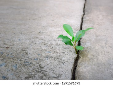 Ecology plant tree and environment drought growing on cracked street