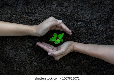 Ecology sapling tree growing up and planting on land. Hands kids Team work protecting and reduce global warming earth, top view.    Agriculture Ecology Concept
