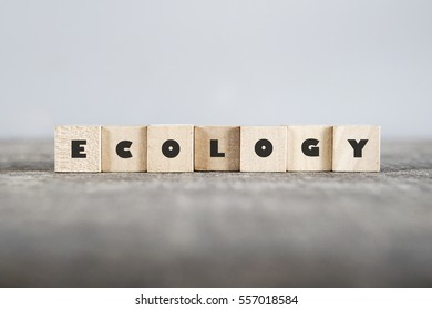 ECOLOGY word made with building blocks