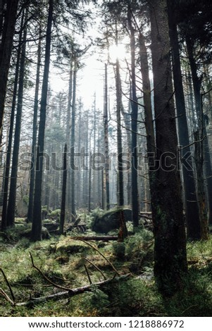 Ecosystem Forest, Germany, Portrait