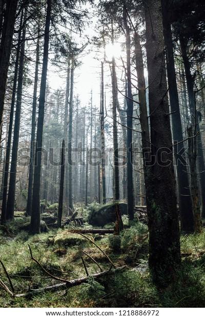 Ecosystem Forest, Germany, Portrait