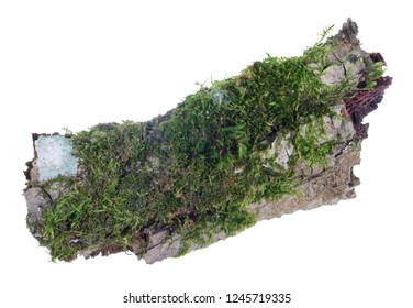 Ecosystem on a piece of pine bark concept. Natural european forest  green  moss and  lichen  plant. Isolated on white studio macro shot