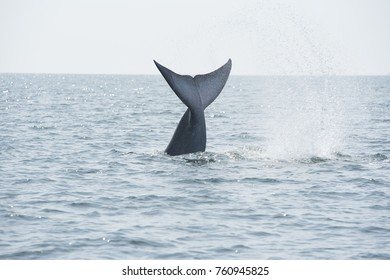 Ecosystems have improved. Find the whale near the coast of Samut Sakhon