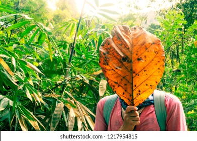 Ecotourism, ecology, jungle, girl with a leaf