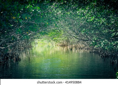 Eco-tourism image of saltwater Florida mangroves