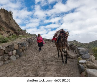 Ecuador local woman with her mule goes down in the mountain path, 02.23.2017, Ecuador, Quilotoa lake
