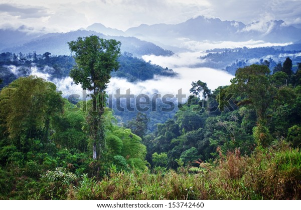 ecuador rainforest forest jungle tropical mountain wildlife rain latina guatemala rainforest ecuador latin america ecuador rainforest forest jungle tropical mountain wildlife rain latina guatemala way