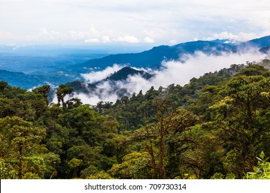The Ecuadorian rainforest, often cloudy, that is why it takes its name from moist forest