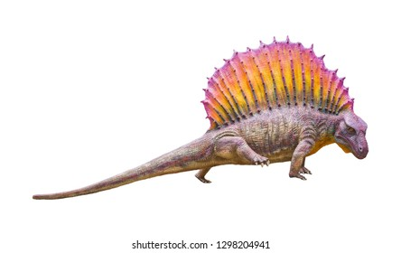 Edaphosaurus is a herbivore genus of Edaphosaurid Synapsid that lived on Permian periods isolated on white background with clipping path