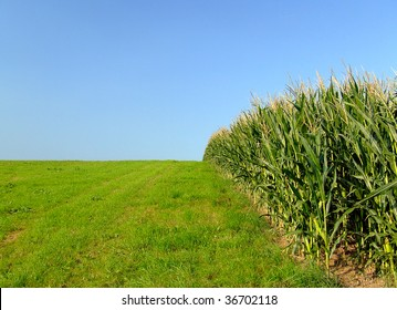 edge of cornfield