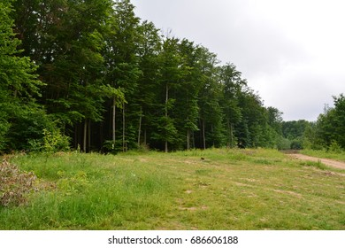 Edge of forest