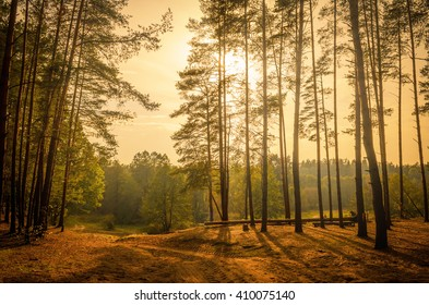 edge of the forest in the backlight