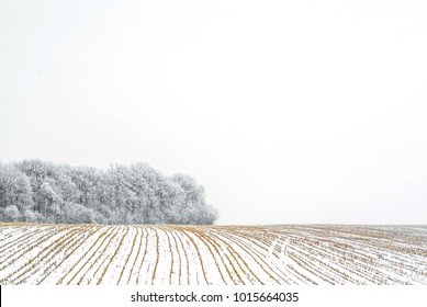 Edge of the forest is covered with hoarfrost. The snow-covered field of the harvested crop.  Christmas background, mood.