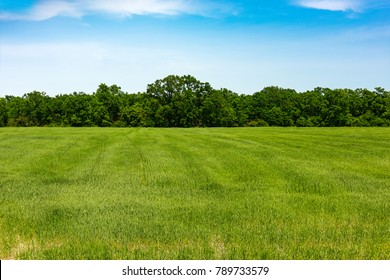 Edge of forest, field with green grass