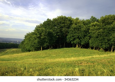 Edge of the forest on the green hill