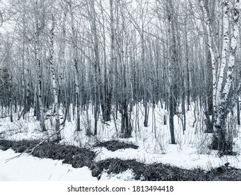 It is the edge of a forest in winter. We find there a mystical effect. This photo was taken near my home. Ulverton, Quebec, Canada; February 26, 2020.
