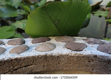 The edge of the pool is made of cement and stone, covered by lotus leaves.