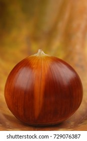 Edible chestnut in macro Closeup with autumn color background