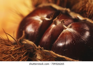 Edible chestnuts in macro Closeup and on the background brown autumn colors