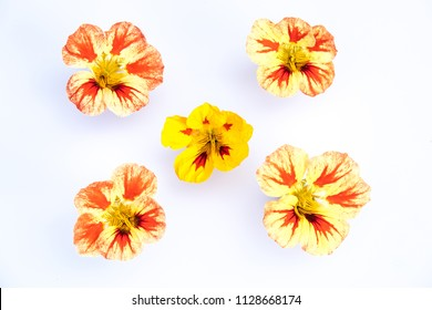 Edible flowers isolated on white background: 5 yellow, orange, red variegated Nasturtium blooms - Tropaeolum blossoms