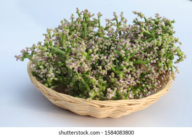 edible flowers and leaves basella alba isolated on white background