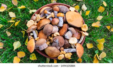 Edible forest mushrooms on a background of green grass with  autumn birch leaves. Cep, orange-cap boletus, chanterelle, rough-stemmed bolete, red-capped scaber stalk in a ceramic bowl on a sunny day