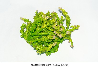 Edible fresh harvested green malabar spinach or basella alba vegetables flowers and seeds over white isolated background.