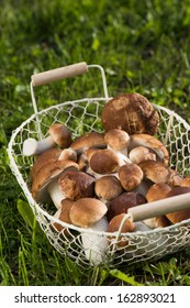 Edible mushrooms in a basket