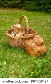 Edible mushrooms collected in a wicker basket. - Shutterstock ID 1994059427