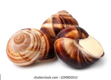 Edible snails (escargot) on white background