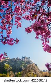 Edinburgh castle with spring tree in Scotland