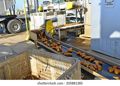 EDISON, CA-JULY 18, 2014: A system of conveyor belts moves potatoes from one station to another at a packing plant in California's San Joaquin Valley.